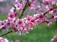 春から夏にかけてのお勧め治療